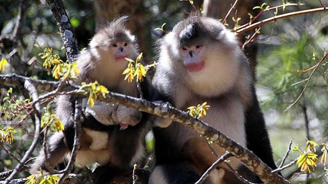 COP15:国际合作 携手保护生物多样性