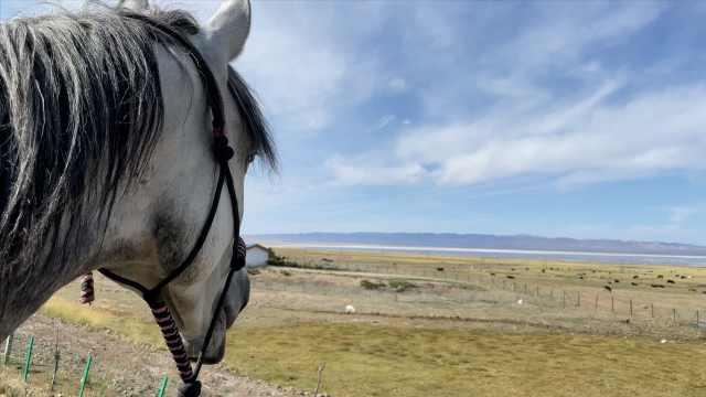 小伙新疆旅游欲骑马8千里回重庆:2个月走3千里,有时睡羊圈