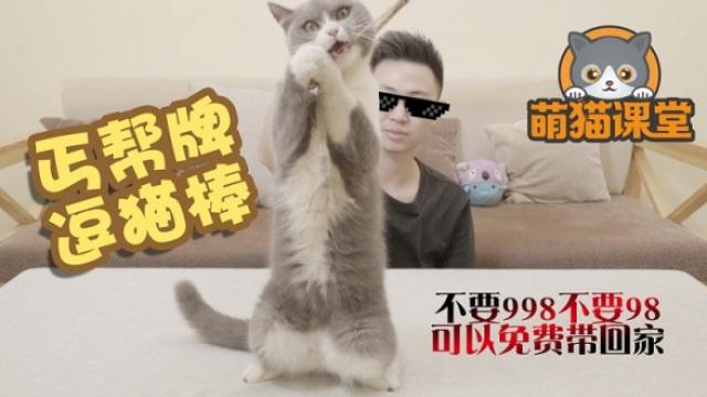 纯爷们儿做逗猫棒,对猫是真爱啊