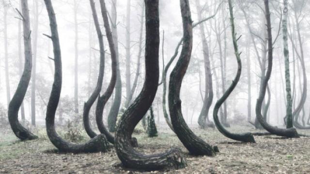 """这里的树胆子真大,""""说弯就弯""""!"""