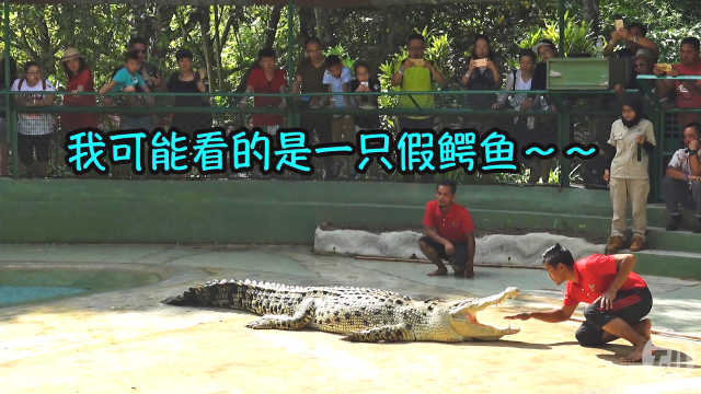 小伙敢这样挑逗鳄鱼,难道是假的?