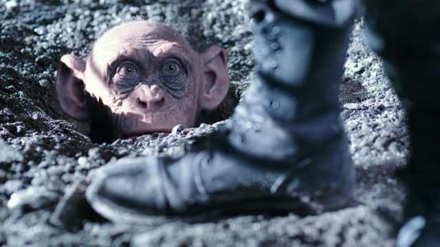 黑猩猩学会了说话,逃脱了屠杀