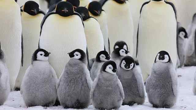 企鹅企鹅,你是吃可爱长大的吗?