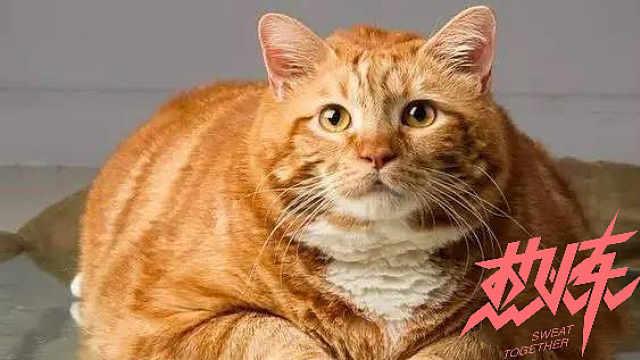 猫界减肥王,照亮你的减肥路
