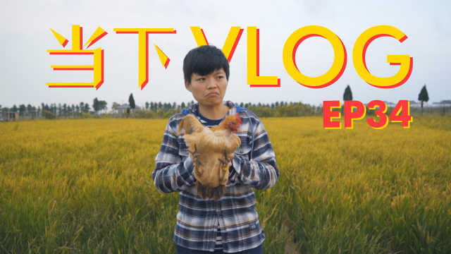 当下频道 Vlog34 我们去农场抱鸡了