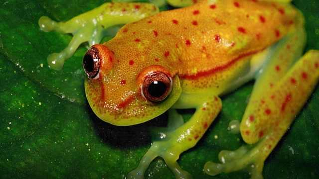 世界罕见变异物种,水陆上都能发光