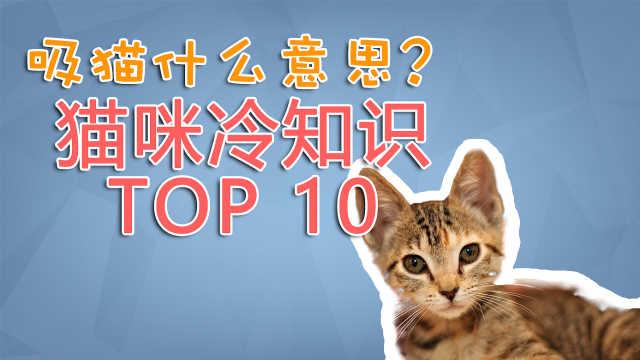 吸猫什么意思?喵星人的十大冷知识