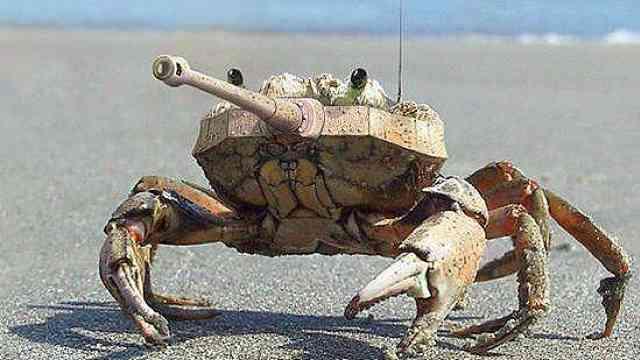 """油炸或清蒸?坦克竟也分""""公母""""!"""