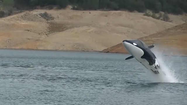 这不是海豚,这是一艘快艇!
