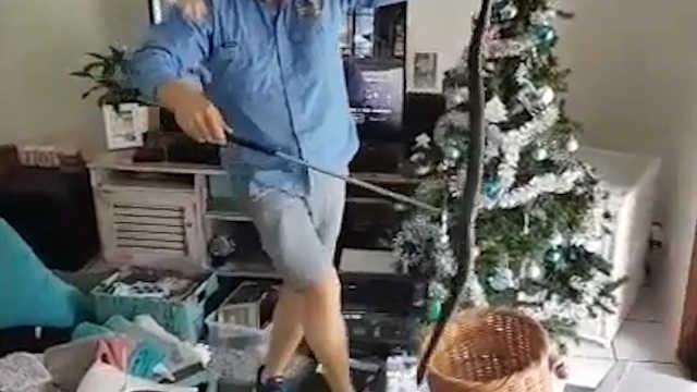 澳洲家庭在圣诞树下发现一条蛇