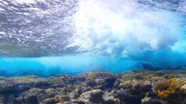 他种下20万棵珊瑚母苗媲美马尔代夫