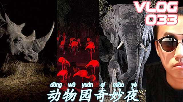 與獅虎共眠?夜訪新加坡動物園!