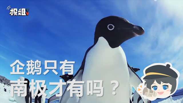 非洲也有企鹅?骗人的吧?
