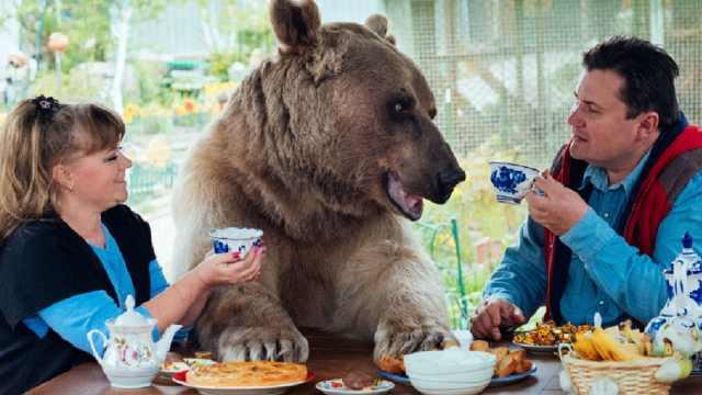 俄罗斯夫妻养了一个熊孩子