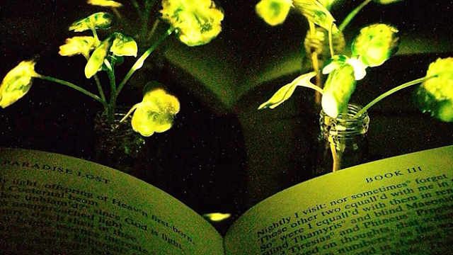 创意植物灯,无需通电就发光!