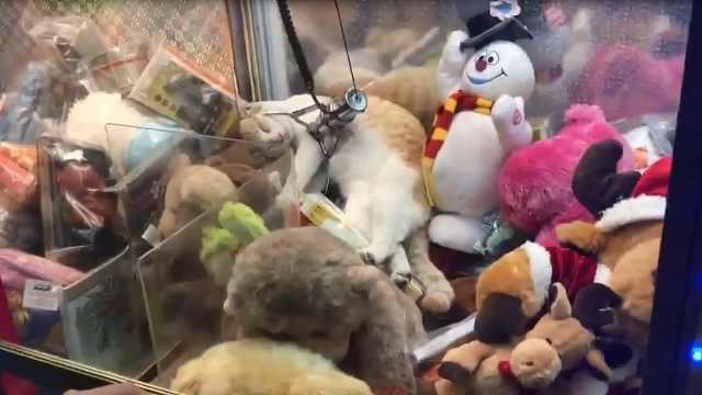爆笑!喵星人混进了娃娃机睡觉