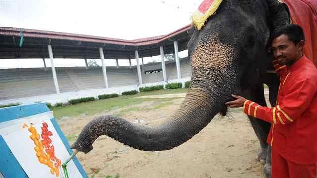 泰国大象会画画,一笔一画像模像样