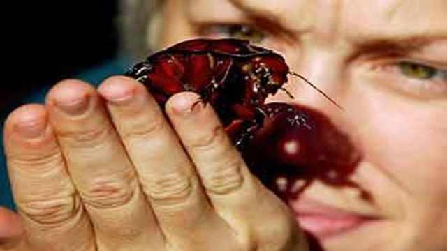 世界末日,蟑螂才是最后赢家?