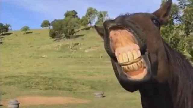魔性!慢镜头下观察马的面部表情