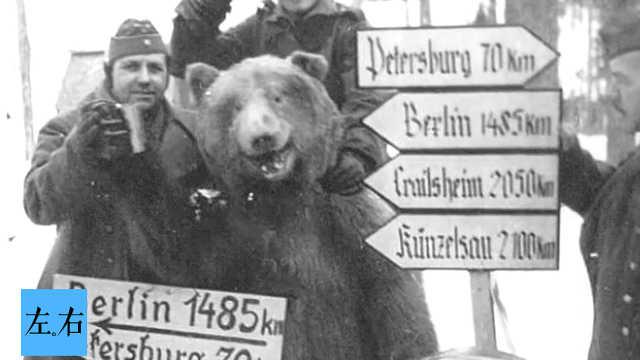 人熊并肩作战世界上唯一有军衔的熊
