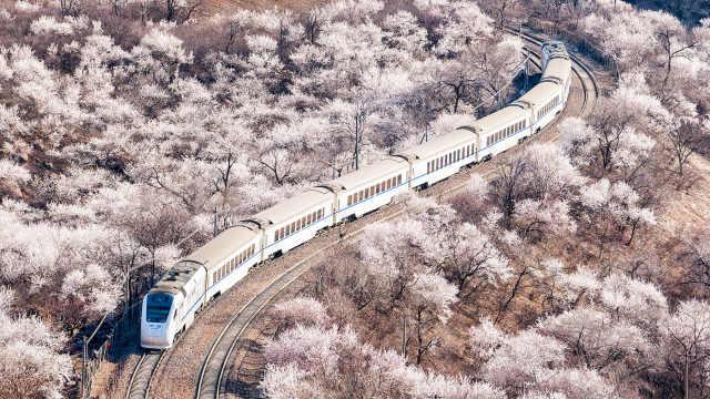 开往春天的北京列车,超日本樱花海