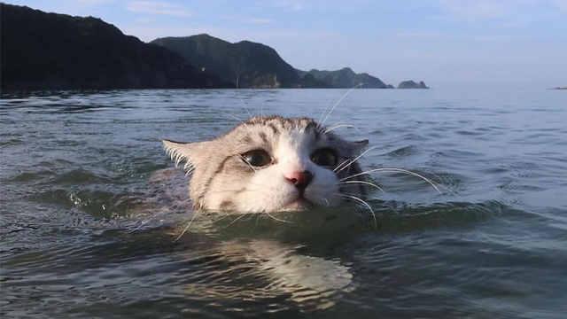 跟着主人旅行,猫咪练就游泳技能