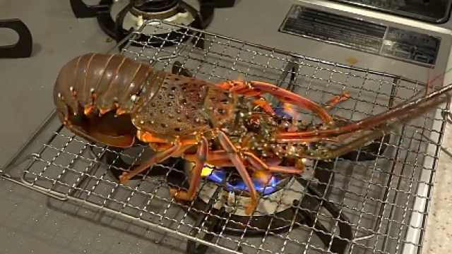 日本小哥活烤龙虾,重口美食敢吃吗
