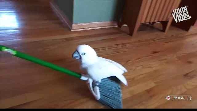 想问问你,为啥总跟清洁工具过不去