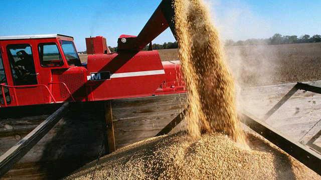 为什么中国要从国外进口粮食?