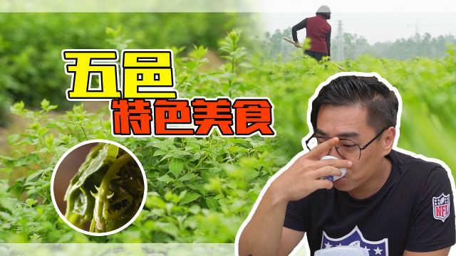 这种青菜虽然带刺,但做茶真好喝!