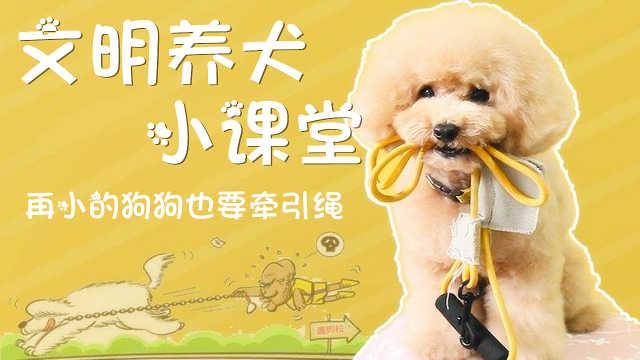 文明养犬小课堂:遛狗要牵绳