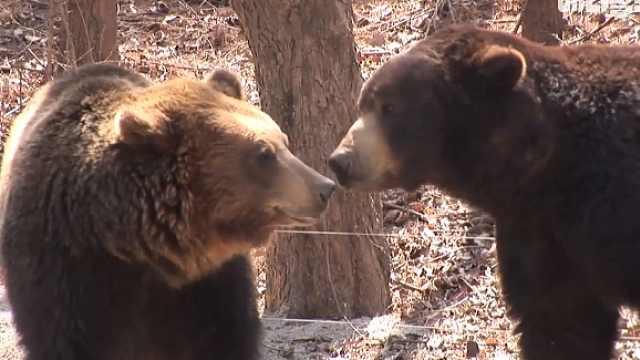 黑熊春天寻找真爱,终抱得小鲜肉归