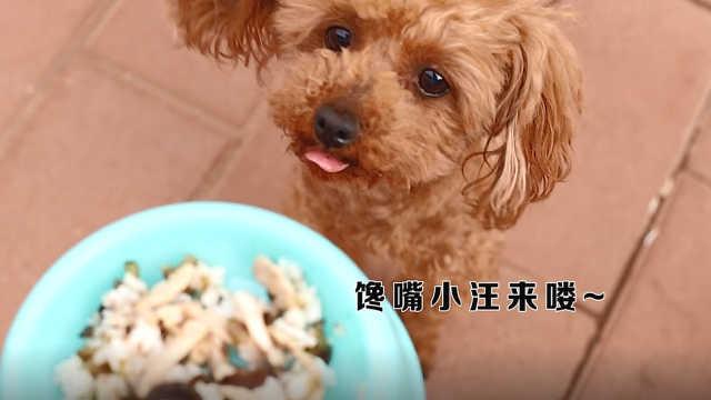 宠物营养美食:猪肉迷你香菇炒饭