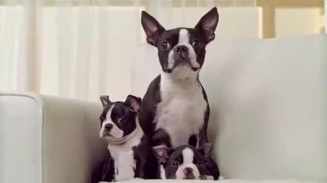 狗:人类驯化产物,最终成为好伴侣