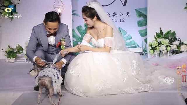 创意婚礼:狗狗婚礼上送戒指