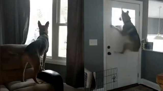 看到主人回家,狗子激动地