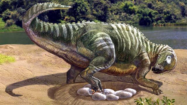 恐龙那么重,为什么不会压碎蛋?