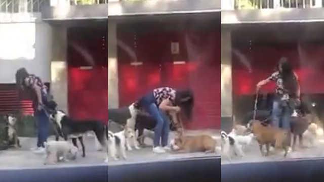 墨西哥街头虐狗,居然是职业遛狗人