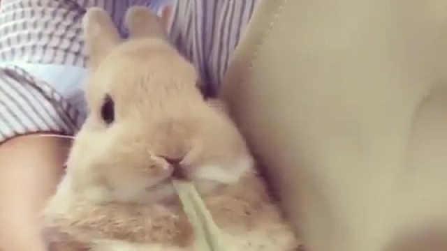 吃东西的小兔子,太可爱了