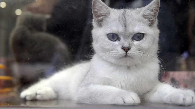 这里的猫咪不卖萌!
