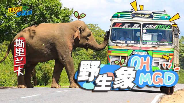 求生欲强烈!路遇野生象必须投食?