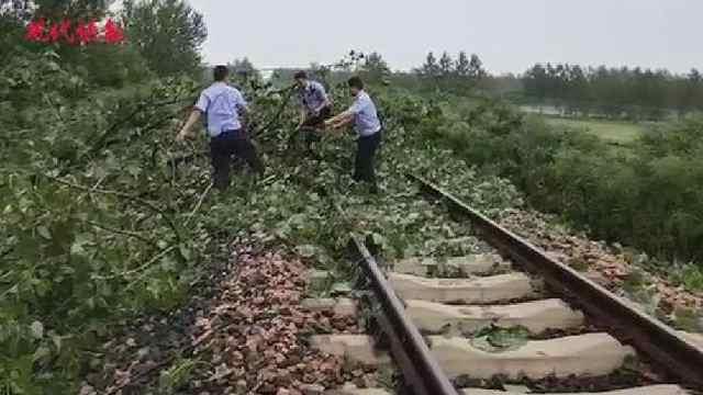 大树倒在铁轨上,民警冒死拦停火车