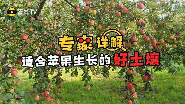 什么土壤是适合苹果生长的好土壤?