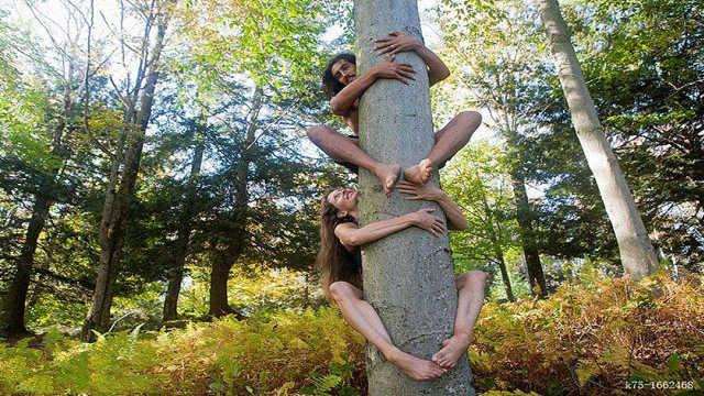 世界上最轻的树,贵到超出想象!
