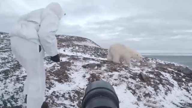 北极熊非要抢镜,摄影师大胆驱赶