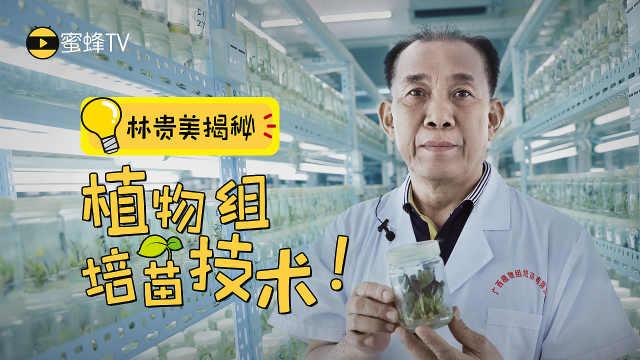 专家手把手教你培育优质种苗