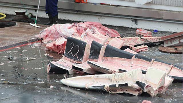 日本人捕杀一头蓝鲸可以赚多少钱?