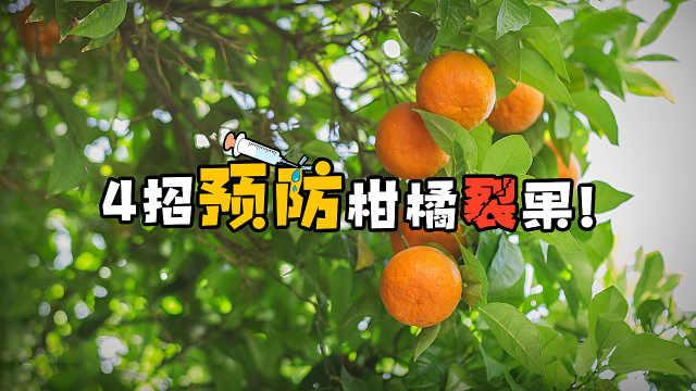 柑橘裂果高峰期在即,果农要小心了