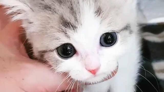 这一脸奶相的小表情也太可爱了吧!