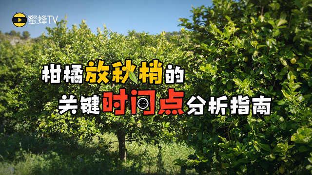 要想柑橘来年结果多,秋梢要放好!